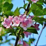 Best Smelling Flowers to Put in Your Garden